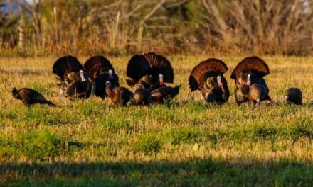 How to Create a Total Turkey Call Collection
