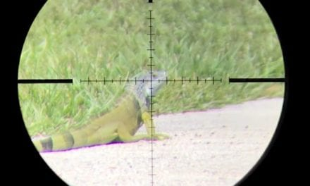 Satisfying Scope Cam Footage Shows Airgun Hunting for Invasive Florida Iguanas