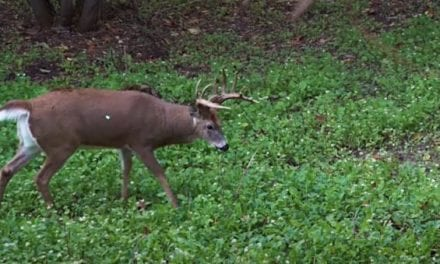 Bowhunter Smokes 180-inch Wisconsin Buck After Some Early Bad Luck