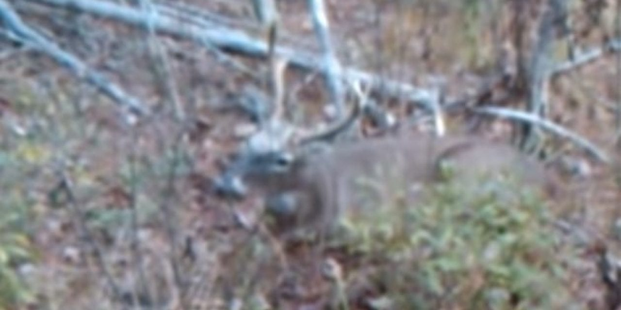 Hunter Walks Right Up to Buck and Shoots