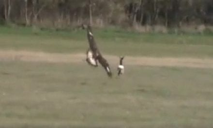 Hunting Deer With Eagles is a Real Thing in Hungary