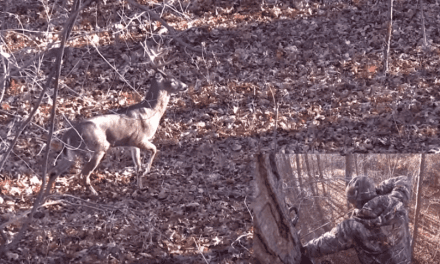 Looking Back on the 17-Point Buck Taken With a Bow in New York