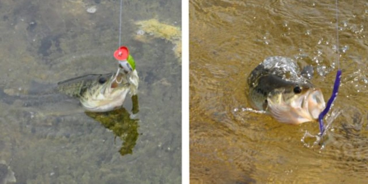 Soft Plastics vs. Hard Baits: When and Why You Should Use Both, and For What Situations