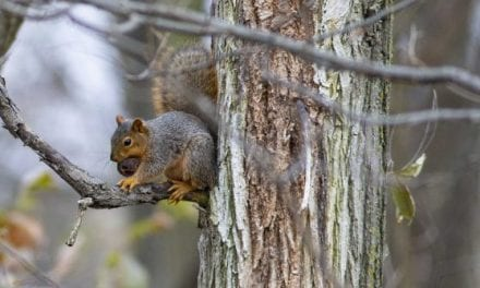 Squirrel Hunting Questions