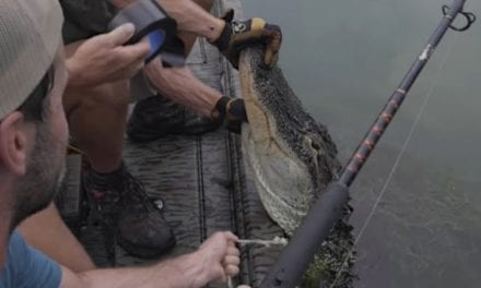 Giant Georgia Alligator Hunt Makes for an Exciting Catch and Cook