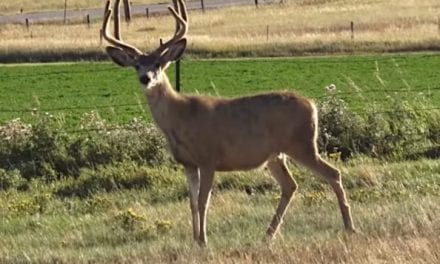 Hunter Smokes Big Wyoming Mule Deer at Close Range on Season's Opening Day