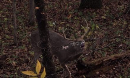 No Hunter Can Resist This Much Deer Grunting