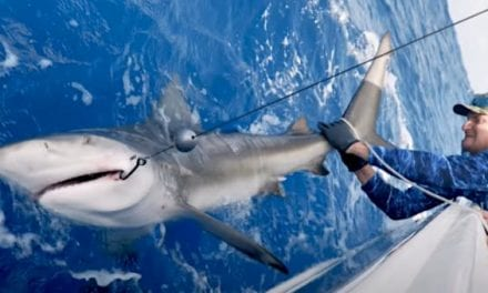 Tampa Bay Buccaneer Rob Gronkowski Catches a Bull Shark with BlacktipH