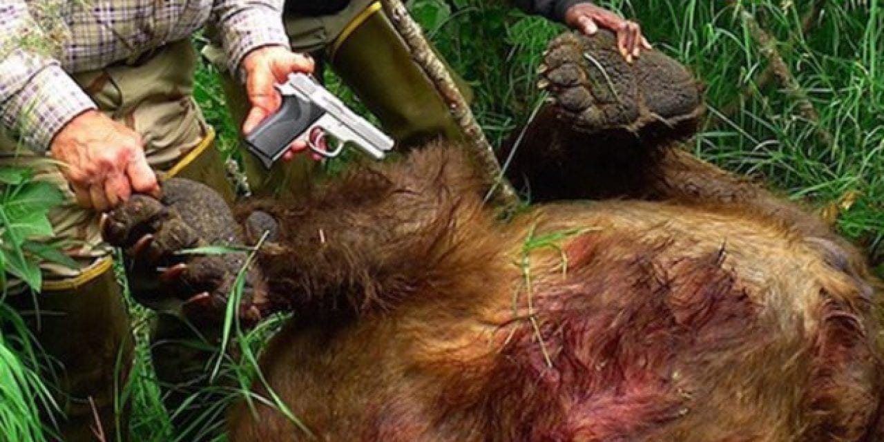 The Story of the Alaska Man Who Killed a Charging Brown Bear with a 9mm Pistol