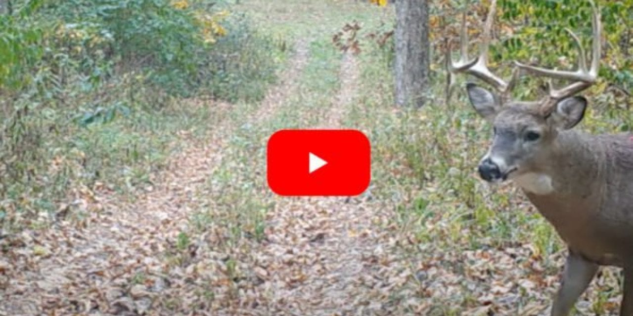 Buck Shows Up on Trail Cam With Impossibly Large Wound, Exposing Organs and Bone