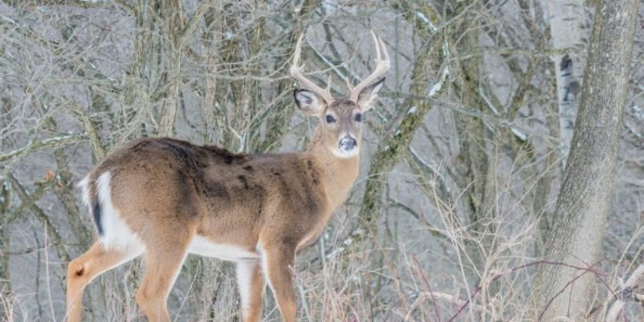 Deer Disease Leads to License Refunds for More Than 9,000 North Dakota Hunters
