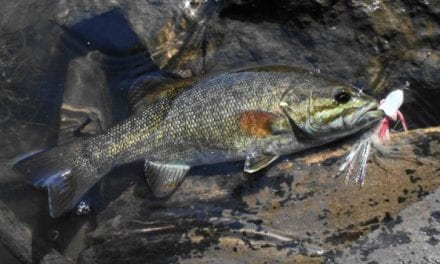 Fly Fishing for Bass: How to Improve Your Knowledge