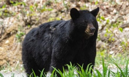 """New Jersey Governor Says 2020 Bear Season """"Will Be the Last"""" in the State"""