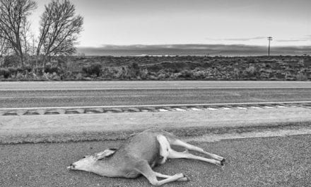 Salvaging and Eating Roadkill is Legal in These States