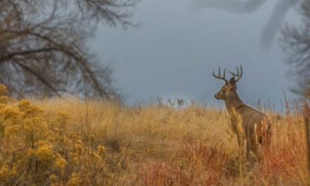 4 Things to Take Away From a Failed Hunting Trip