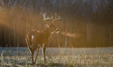 5 Best Gifts for Hunters of 2021: Affordable, Useful, & Fun