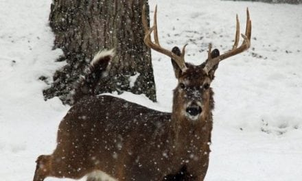 Michigan Will Not Have Statewide Antler Point Restrictions