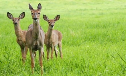 10 Whitetail Deer Facts Most Hunters Don't Know