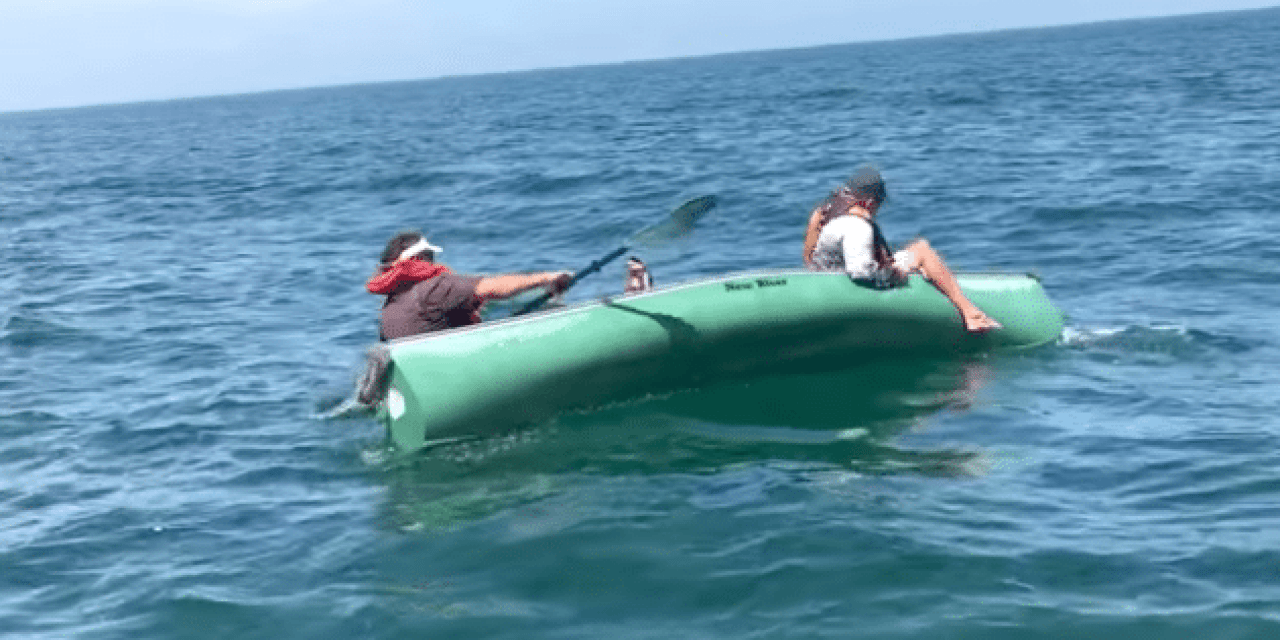 Don't Go Fishing for Goliath Grouper in a Canoe