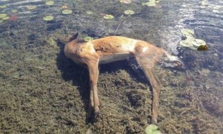 EHD Hits Deer in Ohio Once Again