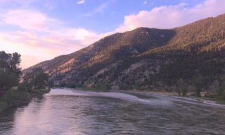 Late July on the Yellowstone River and We Found Rainbow Trout