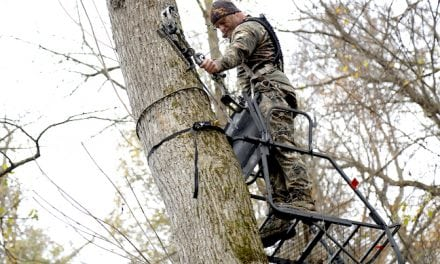 Going Stick 'N String: Bowhunting in Kentucky