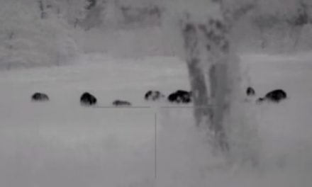 Hog Eradication to the Max: 110 Hogs Taking Dirt Naps