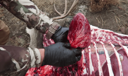 How to Remove the Heart of a Big-Game Animal When Using the Gutless Method