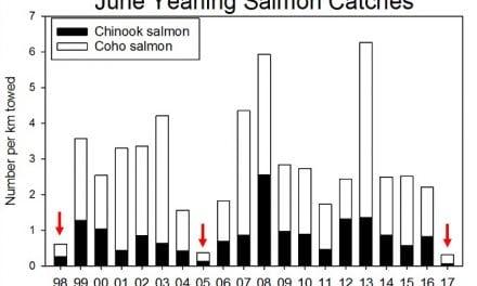 Ocean surveys show poor outlook for Columbia salmon