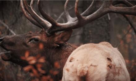 Shane Mahoney Tell Hunters To Take Big Steps For Wildlife