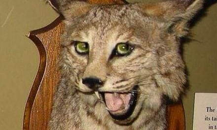 These Just Might be the 33 Worst Taxidermy Jobs of All Time