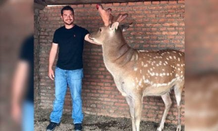 A Vet Creates a Hybrid Between a Sika and Elk in China
