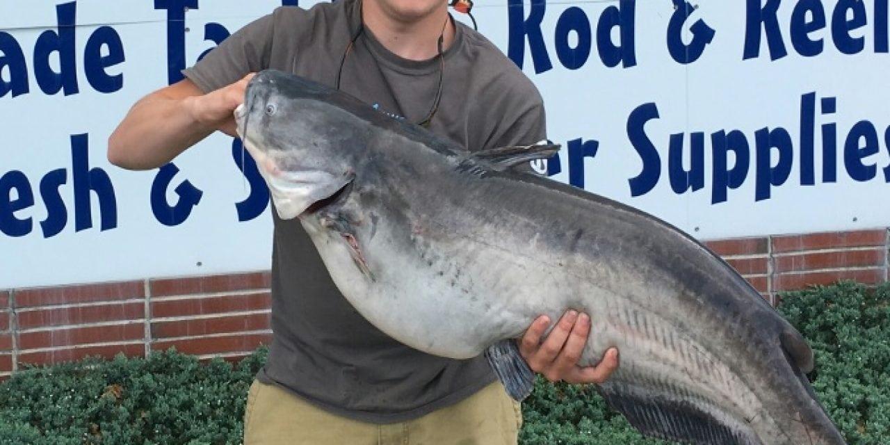Delaware Records A Record Catfish