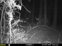 How to Hunt a Nocturnal Buck