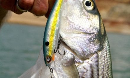 Lake Powell A Fishery Bucket List Destination For All Anglers