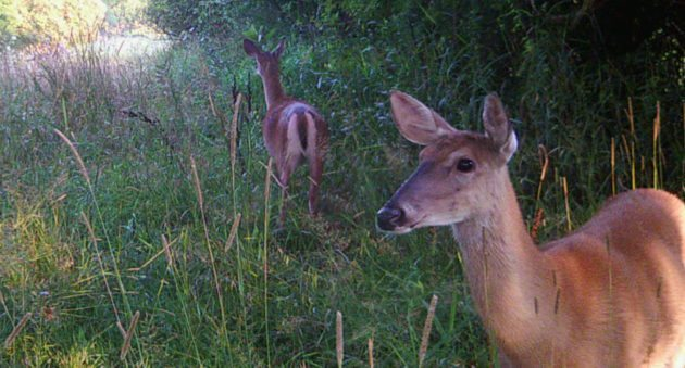 Michigan DNR Says Potential CWD-Infected Doe Shot During Youth Season