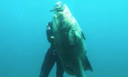 Video: Epic Spearfishing Grouper Shots