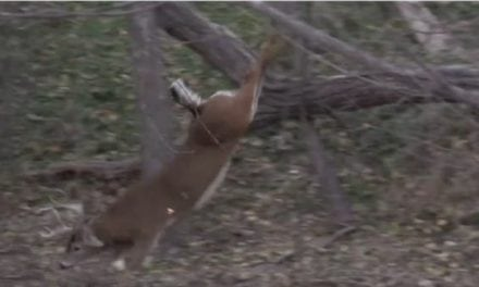 60 Seconds of Bow Kills That'll Get Your Blood Pumping