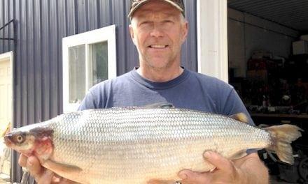 Michigan Announces New Record Cisco (lake herring) from Lake Ottawa