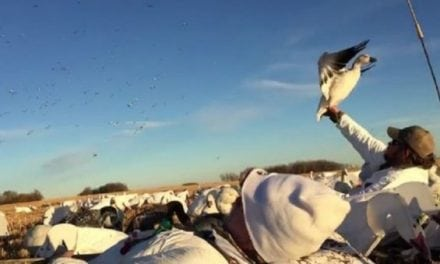 Video: Hunter Miraculously Snags Snow Goose Out of Sky