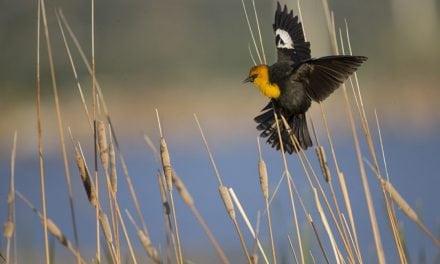 6 Wildlife Photography Locations To Explore