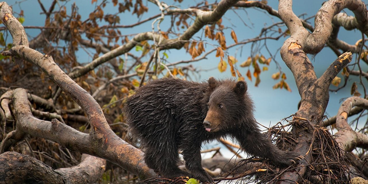 8 Inspiring Wildlife Photography Adventures