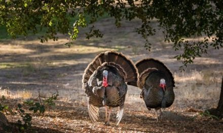 9 Turkey Hunts That You Gotta See