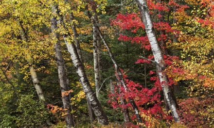 Colors Of The White Mountains