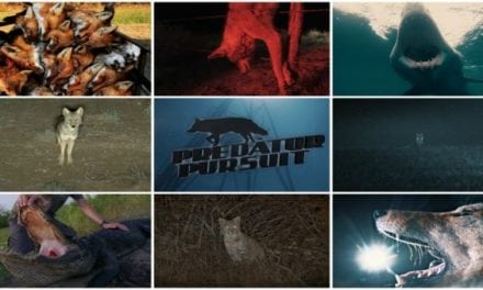 Predator Pursuit Season 6 Will Have Predator Hunters Begging For More