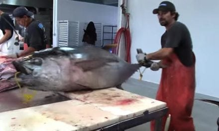This Guy Fillets a 150-Pound Tuna in 2 Minutes Flat