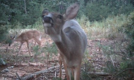 Virginia Confirms 16 New CWD-Positive Whitetail Deer