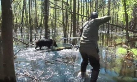 Do You Have What It Takes for a Trad Archery Hog Hunt in the Swamp?