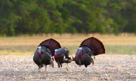 Hunters Pull Off Crazy Turkey Triple