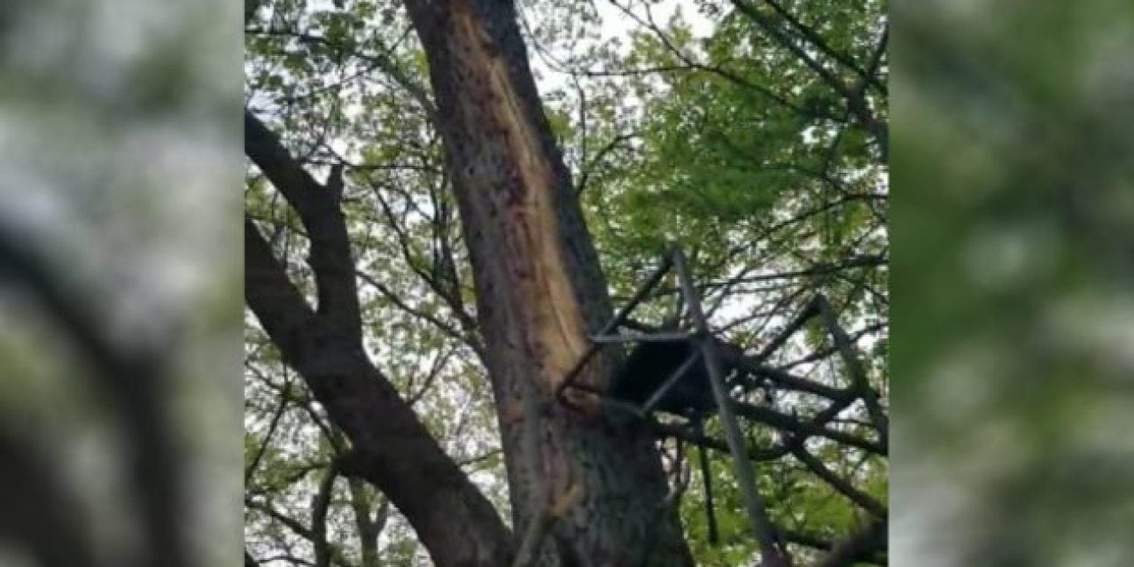 Lightning Destroys Hunter's Ladder Stand